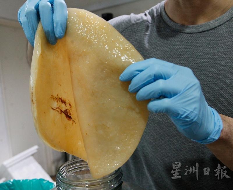 附着在菌膜上方深褐色的薄丝膜是酵母。